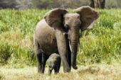rangerausbildung-kenia-elefanten