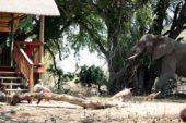 Ranger-Ausbildung-Südafrika-Makuleke-Camp