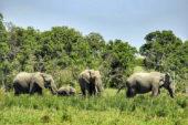 Ranger-Ausbildung-Kenia-Borana-Elefant