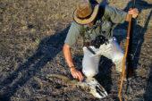 Ranger-Ausbildung-Südafrika-Antilopengeweih