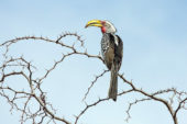 Ranger-Ausbildung-Südafrika-Vogel