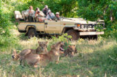 Ranger-Ausbildung-Südafrika-Botswana-Löwen