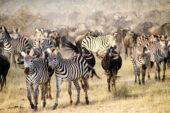 Ranger_Ausbildung_Südafrika_Tiere_Säugetiere-7