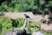 Ranger-Ausbildung-Südafrika-Birdwatching
