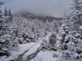 Schnee, Tannen, Landschaft