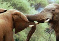 Afrika Lodge Safari Reise