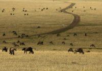 Tansania Safarireise