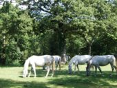 Slowenien-Wanderreise-Pferde