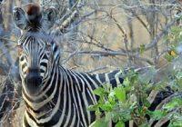 Spezialkurs Wildlife Fotografie in Südafrika oder Botswana