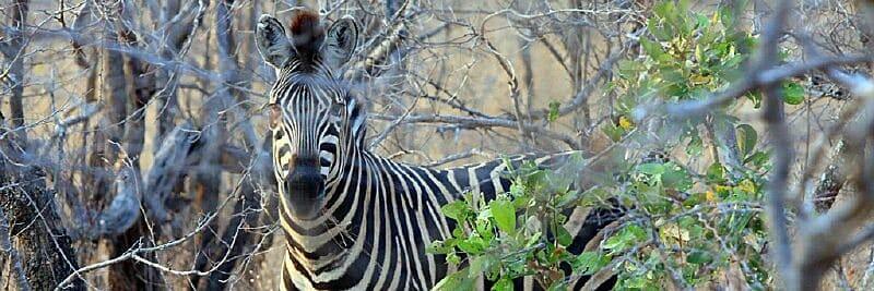 Spezialkurs Wildlife Fotografie in Südafrika