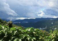 Rundreise Uganda und Ruanda: Wanderurlaub