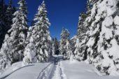 suedtirol-wanderreise-tannen-schnee