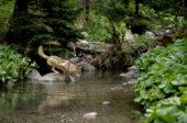 Slowakei-Wanderreise-Wolf