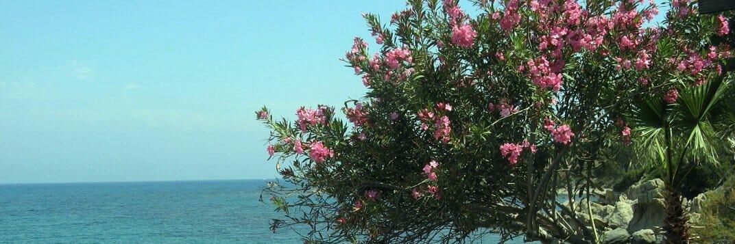 Südzypern Wanderreise: Südliches Zypern Strand