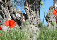 Nordzypern individuelle Wanderreise - kompakt mit Mietwagen
