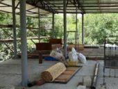 Armenien-Wanderreise-Trockenfrüchteproduktion