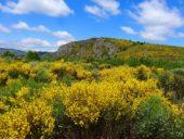 Frankreich-Wanderreise-blühende-Felder