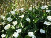 Madeira-Wanderreise-Blumen