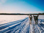 winterreise-finnland-hunde-schlitten