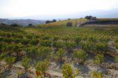 wandern, Weinregion, Paphos