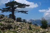 Türkei-Wanderreise-Lykien-Olympos-Nationalpark
