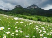 Slowakei, Blumen, Wiese