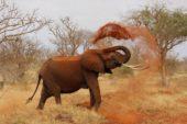 tansania-erlebnisreise-elefant