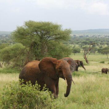 tansania-individualreise-elefant