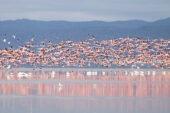 Tansania-ErlebnisreiseLake Manyara-Flamingos