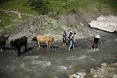 Georgien-Wanderreise-Swanetien-Flussquerung