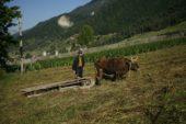 Georgien-Frauenreise-Swanetien-Landwirt