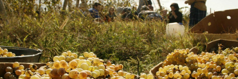 Georgien Weinreise - Im Ursprungsland des Weins
