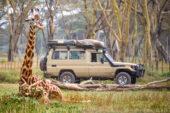 Tansania-Erlebnisreise-Giraffen-Jeep-Safari