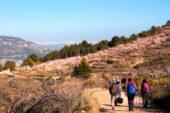 spanien-wanderreise-blühendebäume-wanderkulisse