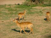 malawi-erlebnisreise-tierbeobachtungen