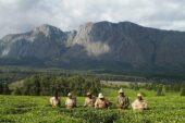 Erlebnisreise-Malawi-Mulanje Berge
