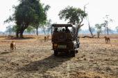 Erlebnisreise-Sambia-Geländewagen-Safar