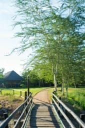 Südafrika-Lodge-Paket-Sefapane-Brücke