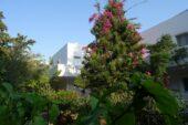 griechenland-wanderreise-eristosbeach-tilos