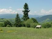 Ukraine-Wanderreise-Pferd-Synewyr-Nationalpark