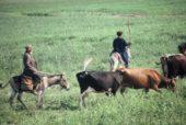 Usbekistan-Erlebnisreise-Rinder