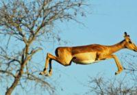 Afrika Camping Safari Reise