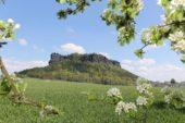 deutschland-wanderreise-saechsische-schweiz-lilienstein-fruehling