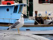 italien-wanderreise-möwe-grado