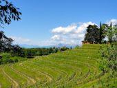 italien-wanderreise-collio