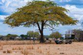 tansania-erlebnisreise-akazie